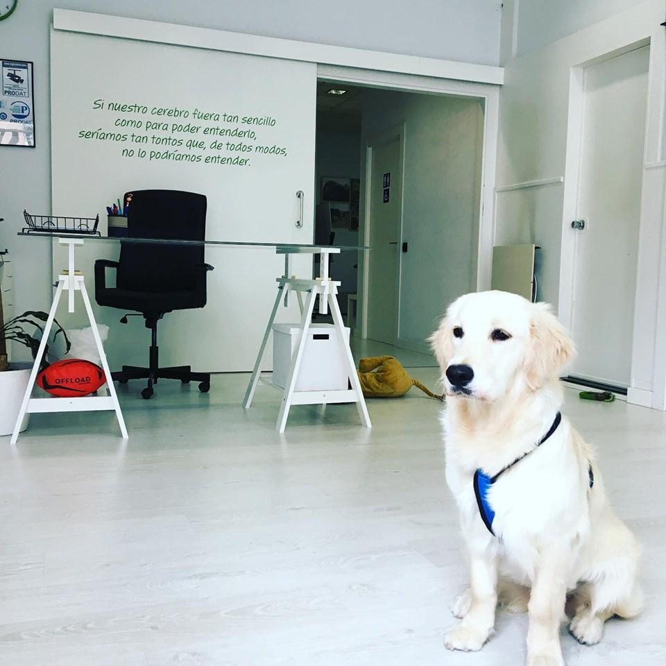 LK Salud. Perros de terapia